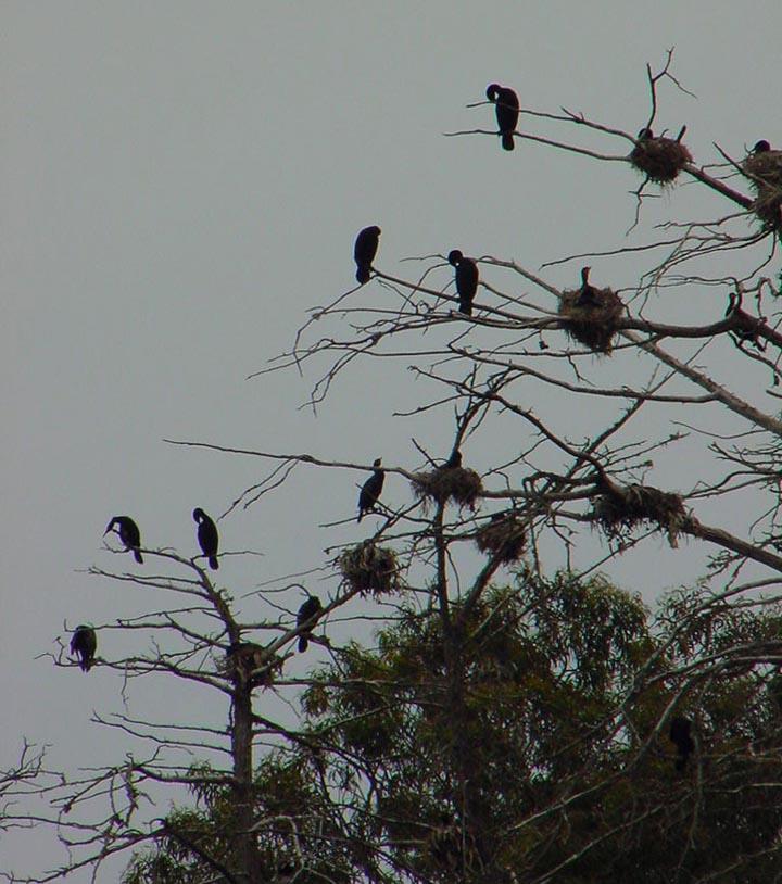 Coromants  nesting 3 sm