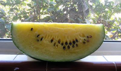 Yellow watermelon