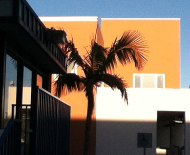 Alhambra palm orange and blue