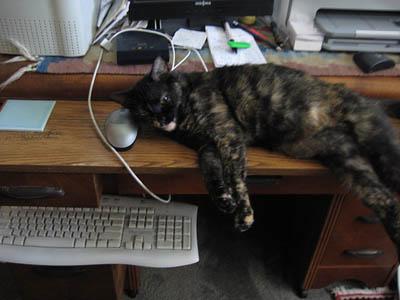 Mimi on computer