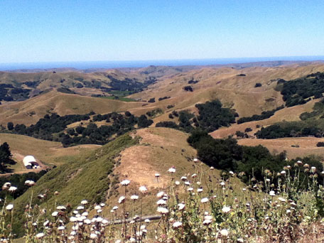 Coastal hills west with thistles