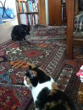 Cats and rugs