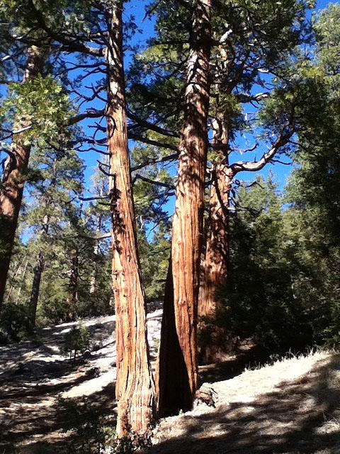 Cedars off hwy 2
